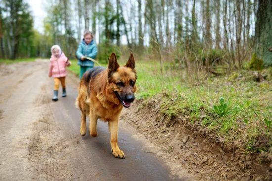 Kinderen wandelen met een hond in het bos