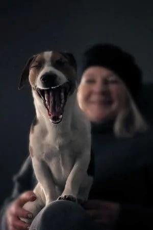 Geeuwende hond met lachend baasje op de achtergrond