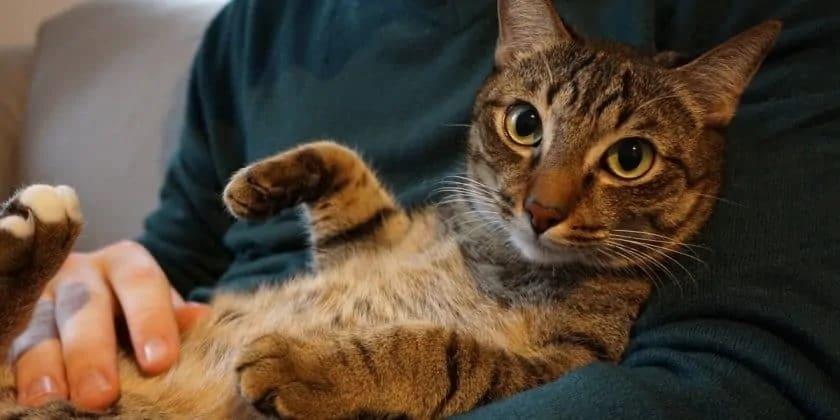 Kat op de arm