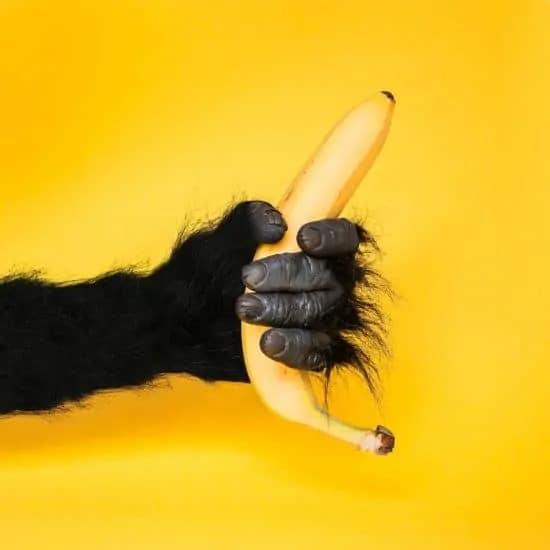 Aap met banaan tegen een gele achtergrond