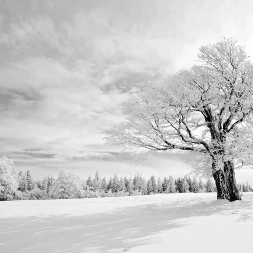 Winterse foto met veel wit