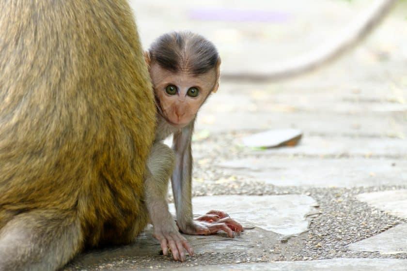 jonge dieren beelden