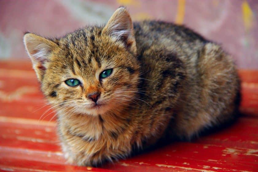 katten afbeeldingen