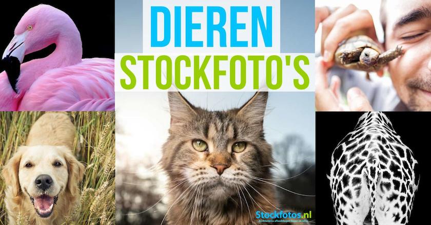 Dieren stockfoto's - koop ze voor de meest creatieve toepassingen! 1