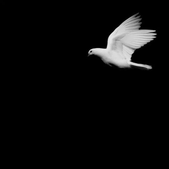 Foto met duif