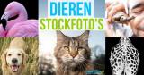 Dieren stockfoto's – koop ze voor de meest creatieve toepassingen!